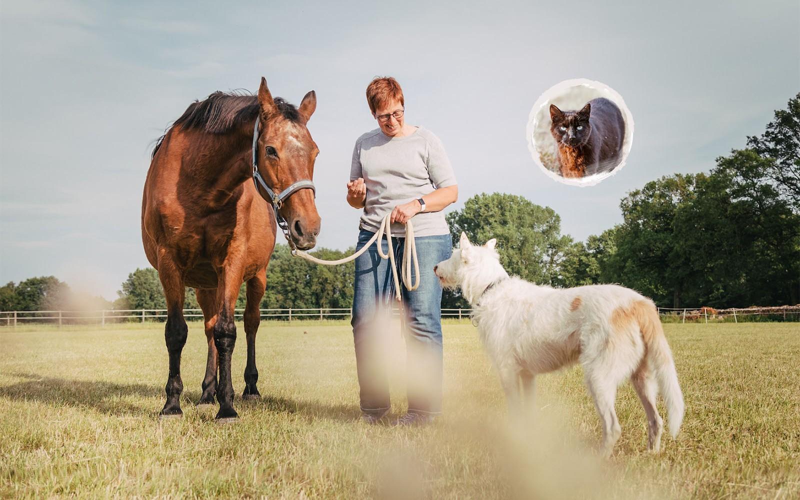 Tierbetreuung für Hund, Katze und Pferd