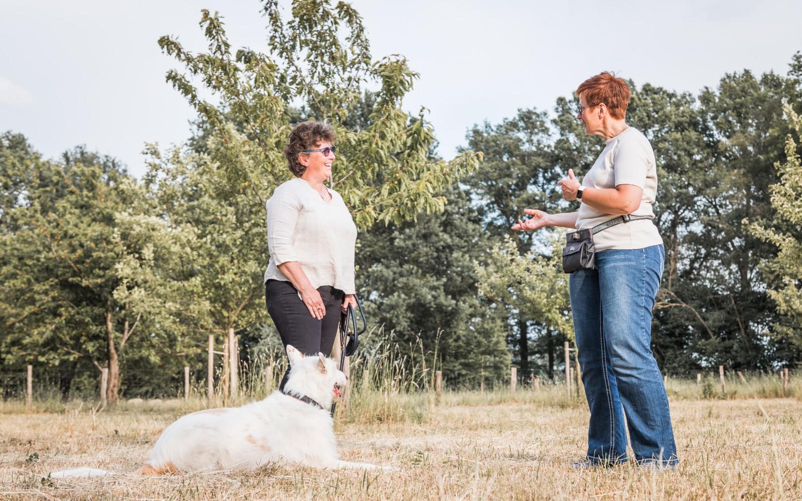 Individuelles Hundetraining